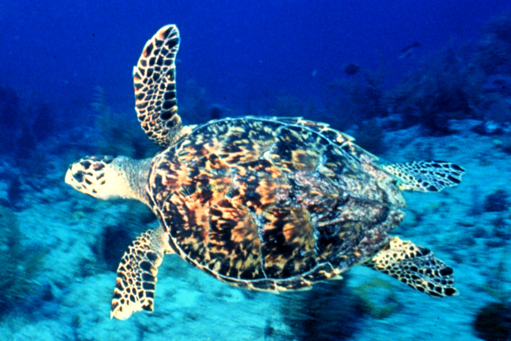 sea turtle tipster home